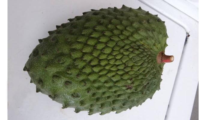 Productos guanabana for Viveros frutales bogota